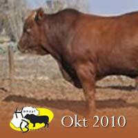 Hanzyl bulletin Oktober/October 2010