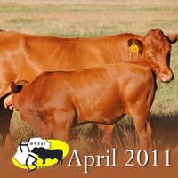 Hanzyl bulletin – April 2011