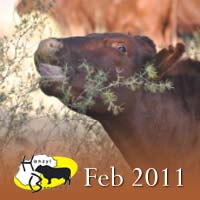 Hanzyl bulletin – Februarie/February 2011